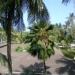 Looking out of my room at Diani Reef