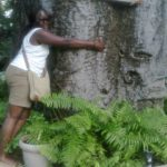 Hug a tree! Baobab at the Diani Reef Hotel