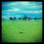 Mara is so green at this time of the year!