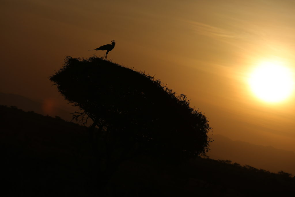 Sunset in Lewa