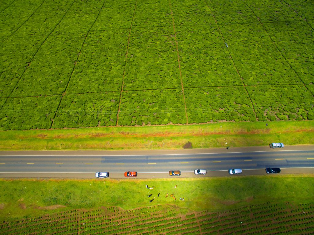 Kericho's lush tea farms stretch for miles - Photo by Thoroughbred Films